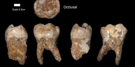 Le plus vieil Homo sapiens a 400 000 ans  - LeMonde.fr | Aux origines | Scoop.it