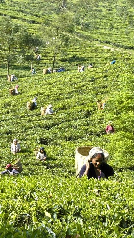 The mystic mountains of Darjeeling tours | Jammu Kashmir India | Scoop.it