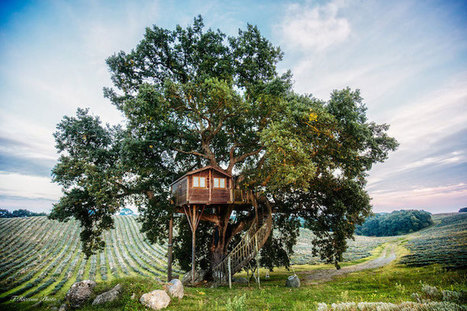 Picturesque Tree House Getaway in Italy Located in a Field of Lavender | Le It e Amo ✪ | Scoop.it