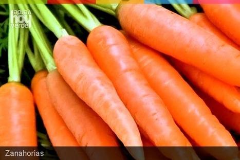 10 beneficios de las zanahorias | Agroindustria Sostenible | Scoop.it
