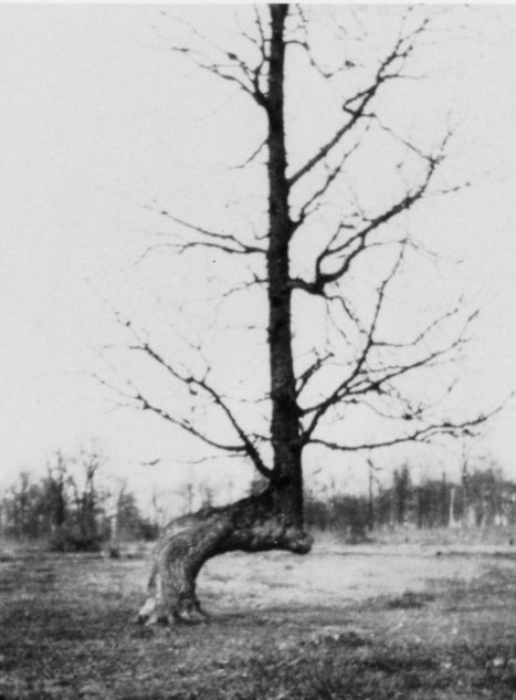These Strangely Bent Trees Were Ancient Native American GPS | An odd mix of stuff | Scoop.it