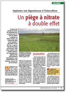 A2C le site de l'agriculture de conservation : Implanter une légumineuse à l'interculture | Végétalisation | Scoop.it
