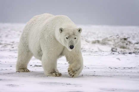 A Warm House Thanks to Polar Bear Principle | Biomimicry | Scoop.it