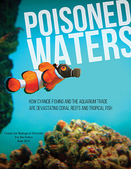 U.S. Pet Trade Imports 6 Million Tropical Fish Captured Using Cyanide Each Year | GarryRogers Biosphere News | Scoop.it