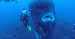 These Divers Get A Once In A Lifetime Treat When They Jump Into The Water… | Mogul | Scoop.it