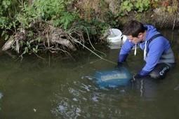 Les gammares dénoncent la pollution | Toxique, soyons vigilant ! | Scoop.it