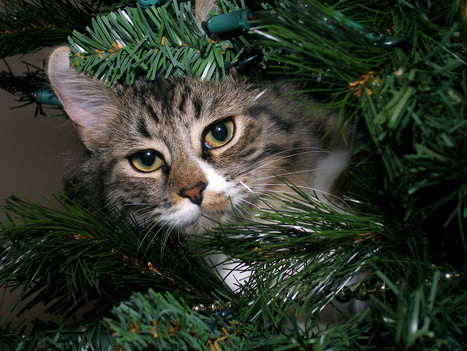This is how cats view Christmas (OT) - Steve's Digicams Forums | Christmas Cat Ornaments and Cards | Scoop.it
