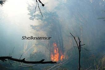 Tengamos conciencia de los efectos devastadores de los incendios forestales | Asociación Manekenk | Scoop.it