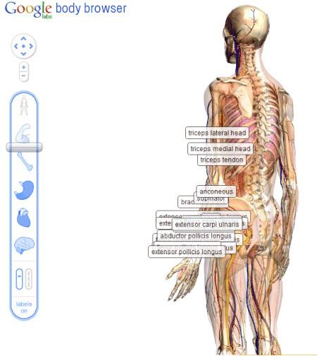 aprendamoshaciendo: Body browser, un Google Earth para el cuerpo humano | English for young children | Scoop.it