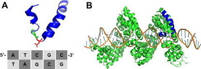 Engineering synthetic TALE and CRISPR/Cas9 transcription factors for regulating gene expression -Methods | Hormones in Plant Development | Scoop.it