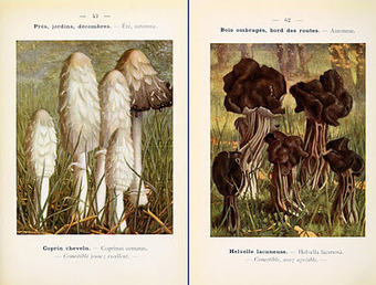Biodiversity Heritage Library: Celebrating that Delightful Fungus Known as the Mushroom | Garden Libraries | Scoop.it
