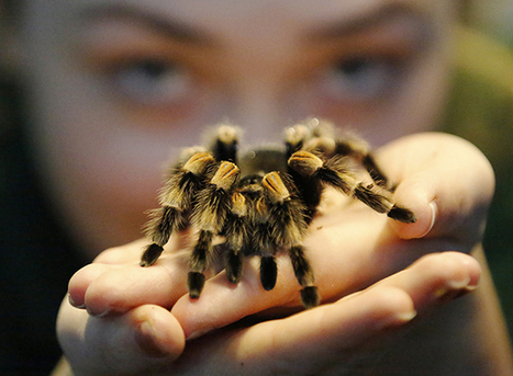 Even scientists who study bugs have an irrational fear of spiders | InsectNews | Scoop.it