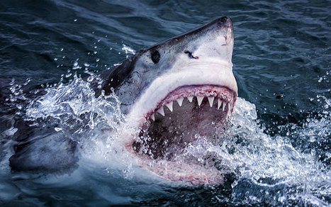 11 things you didn't know about sharks | Oceans and Wildlife | Scoop.it