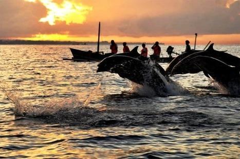 Paket Tour Bali Dolphin 4 Hari 3 Malam Termasuk hotel   fastatour   Scoop.it