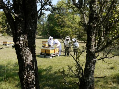 Inauguration d'une maison de l'apidologie dans le Var | Le monde des abeilles | Scoop.it