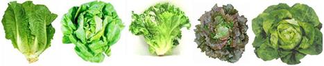 Faire pousser des salades sur son balcon - Tube Vegetal | Vertical garden | Scoop.it
