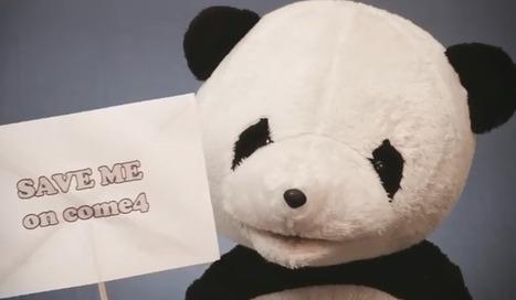 Sauvez un panda, regardez un porno   Art, Culture et Société   Scoop.it