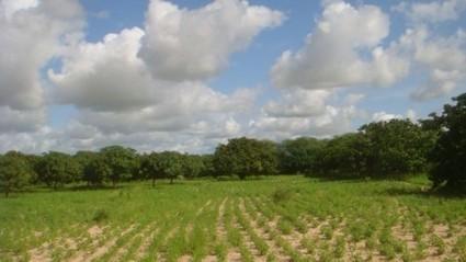 Sénégal : Selon Moussa Mbaye, 30% des terres arables sénégalaises ont fait l'objet d'acquisitions massives - Ecofin | Akory! | Scoop.it
