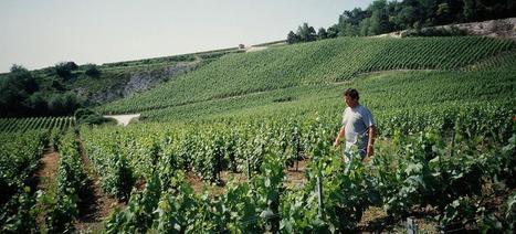 Anselme Selosse, le Picasso du chardonnay   Le vin quotidien   Scoop.it