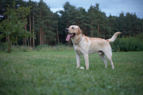 Top 7 Dog Breeds for Hiking | Ausangate Socks | Scoop.it