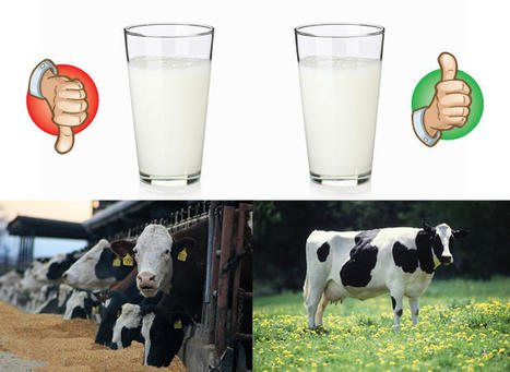 U.K. organic milk better for you than conventional, thanks to cows' grass-based diet | Grist | Diary of a serial foodie | Scoop.it