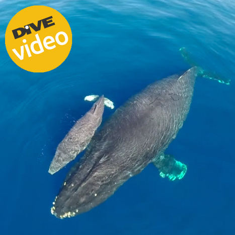A WHALE OF A VIEW | All about water, the oceans, environmental issues | Scoop.it
