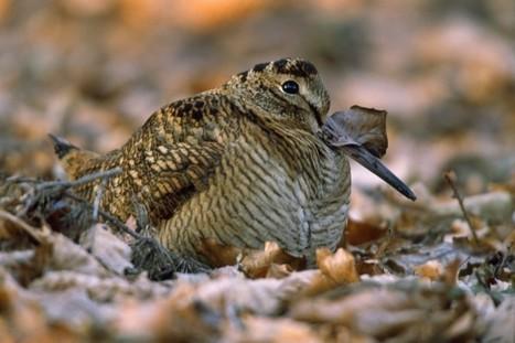 Le réchauffement climatique affecte déjà les oiseaux, selon Marc Giraud | De Natura Rerum | Scoop.it