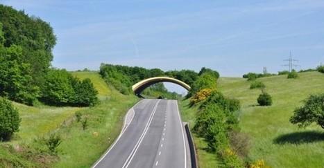 Obrazom: 10 najkrajších zelených mostov pre migráciu zvierat | Milujem prírodu | Scoop.it