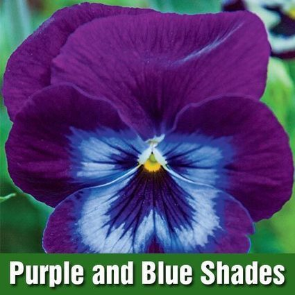 Trailing WonderFall™ Pansy Collection | My Garden- Spring Hill Nursery | Scoop.it