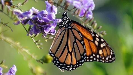 Les insectes se raréfient : pourquoi cela doit nous interpeller ? | Environnement et développement durable, mode de vie soutenable | Scoop.it
