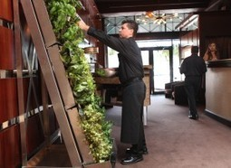 Innovation's on the rise with indoor vertical gardens - Sioux City Journal   Aquaponics   Scoop.it