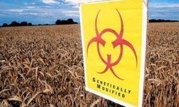 900 Scientists Report: GMO Crops Proven to be Ineffective at Fighting World Hunger | YOUR FOOD, YOUR ENVIRONMENT, YOUR HEALTH: #Biotech #GMOs #Pesticides #Chemicals #FactoryFarms #CAFOs #BigFood | Scoop.it
