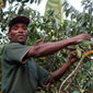 Aide pour le commerce – Une initiative bénéfique pour les pauvres?   World Food News   Scoop.it