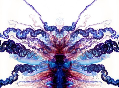 Scary, Suggestive Portraits Of The Portuguese Man O' War... | Art for art's sake... | Scoop.it