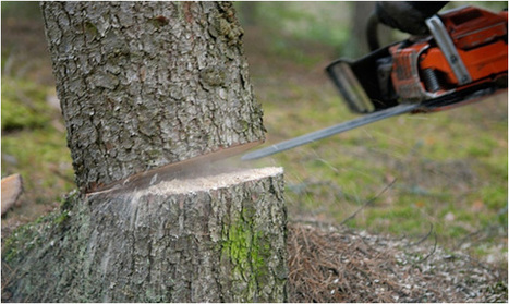 Tree Removal Companies: What Can We Expect From Them? | Superior Garden Related Services In UK | Scoop.it