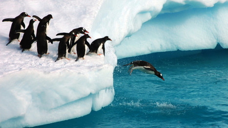 "Google Says Penguin To Shift To ""Continuous Updates"" 