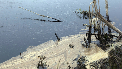 Company claims central Alberta oil spill mostly contained - CBC.ca | Govt News | Scoop.it