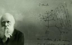 Evolução vs. Design inteligente | Livres Pensadores.net | Desenho | Scoop.it
