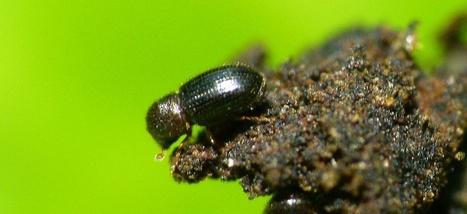 Ces petit insectes immunisés contre la caféine sont les pires ennemis de votre café | Science et Santé Naturelle | Scoop.it
