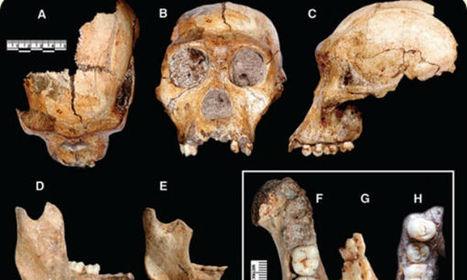 Hallazgo: ¿Encontraron el eslabón perdido de Darwin? - Urgente 24   biologia 2 carhue   Scoop.it