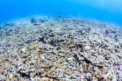 Oceans' greater heat explains warming 'pause' | in plain sight | Scoop.it