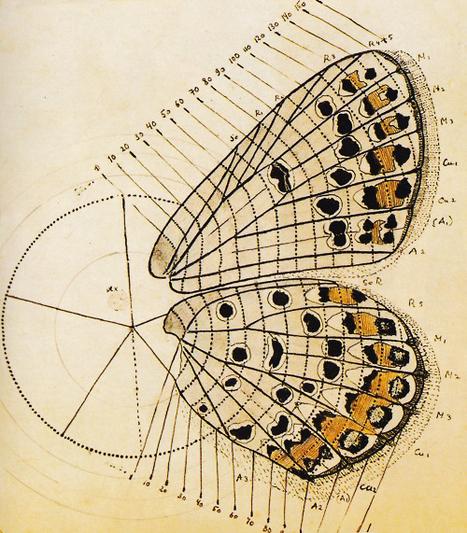 Scientific Illustration Tumblr | 1 | Scoop.it