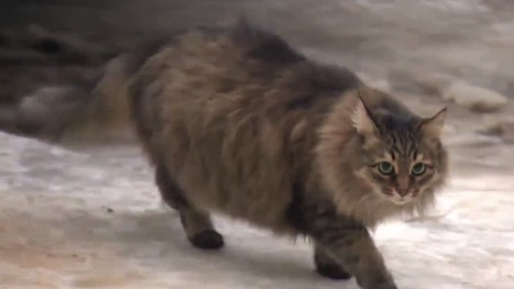 Homeless cat saves baby from freezing by snuggling to keep it warm | Miscellaneous | Scoop.it