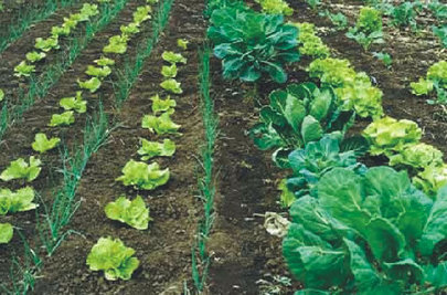 Diferencias entre agroecología y producción orgánica. | Mundo Agroalimentario | Scoop.it