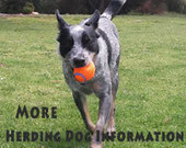 Herding Dogs - Dog Breed Information and Dog Care Tips | Working Dogs | Scoop.it