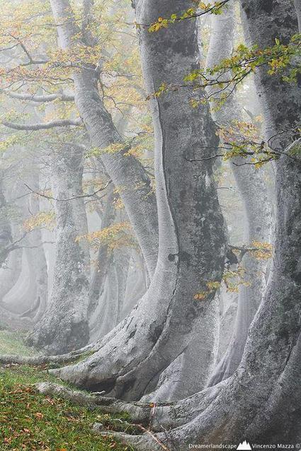 "Beautiful Pictures on Twitter: ""Ancient Forest in Abruzzo, #Italy. http://t.co/kyViq8DIQX"" 