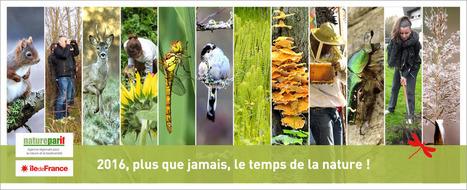 Agriculture urbaine IDF | Les colocs du jardin | Scoop.it
