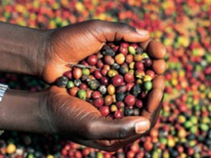 Café : la Côte d'Ivoire relève son prix au producteur | Questions de développement ... | Scoop.it