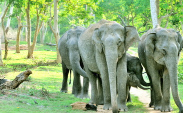 Empathetic Elephants Console Each Other Like Humans Do - Care2.com | Empathy in other animals | Scoop.it
