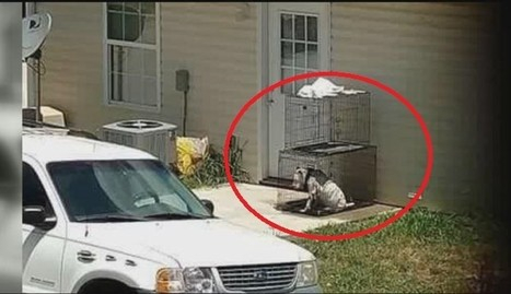 Neighbors Work To Save Dog Left In Cage In Hot Sun | Nature Animals humankind | Scoop.it